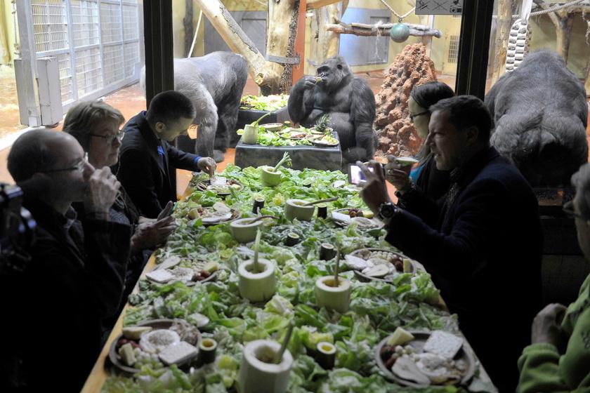 gorilla-reggeli