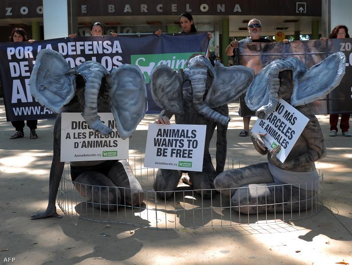 Az AnimaNaturalis állatvédelmi csoport aktivistái részt vesznek egy előadásban, az elefántok jogainak nemzetközi napján a barcelonai állatkert előtt 2012. június 20-án.