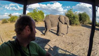 Botswanában újra legálisan lehet elefántokra vadászni