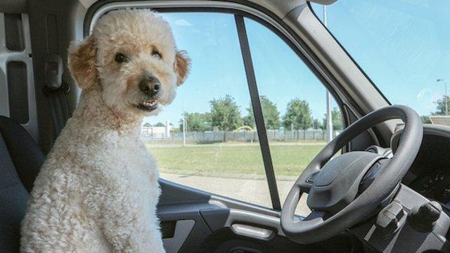 Mit ad nekünk, hogy a kutyák nem beszélnek?