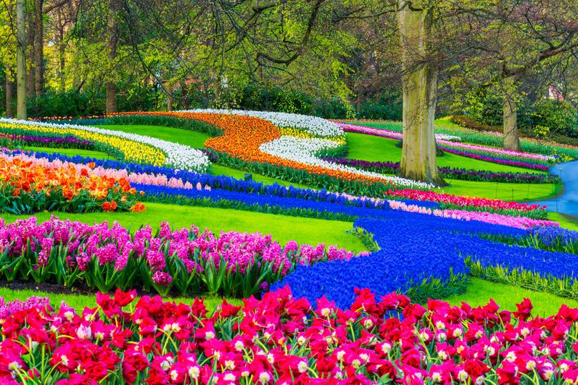 A hollandiai Lisse város mellett található Keukenhof a világ legnagyobb virágoskertje: évente ugyanis mintegy hétmillió virághagymát ültetnek a 32 hektáros parkban.