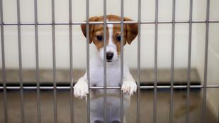Ne félj a menhelyi kutyától, a leghűségesebb társad lesz!