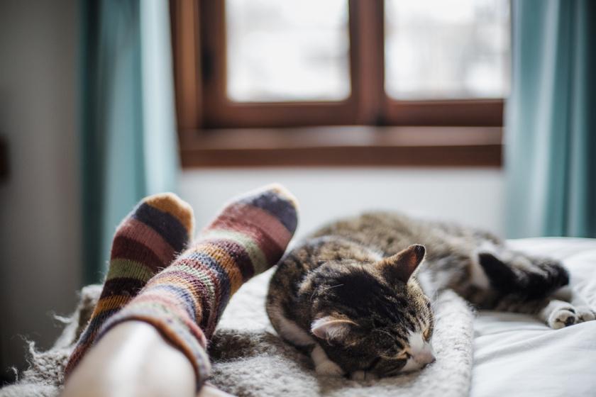 zokni-agy-alvas