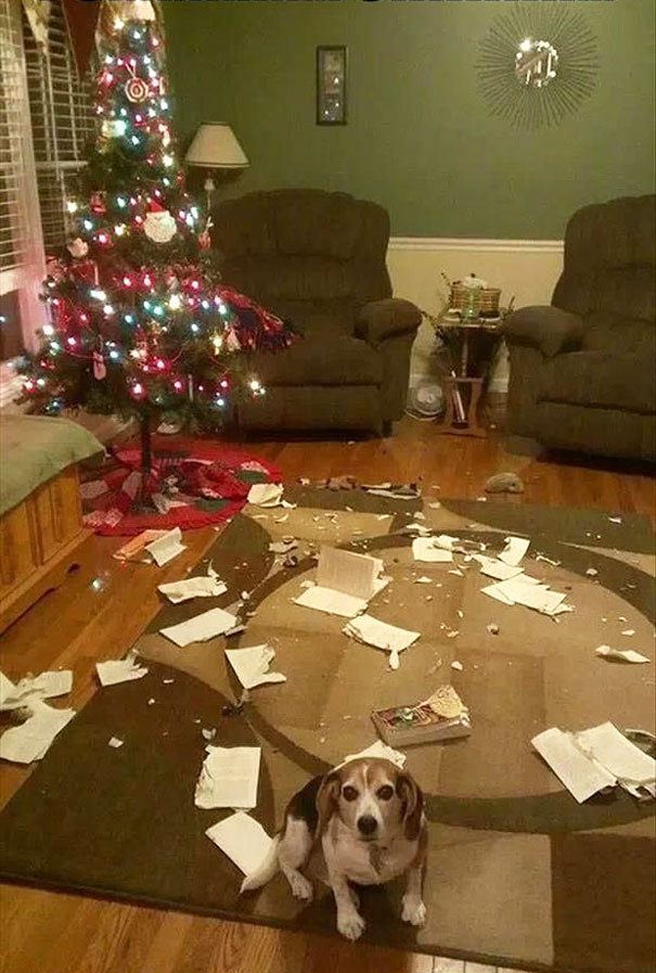 Legalább a karácsonyfa ép maradt - mutatta a gazdi kis kedvencének pusztítását.