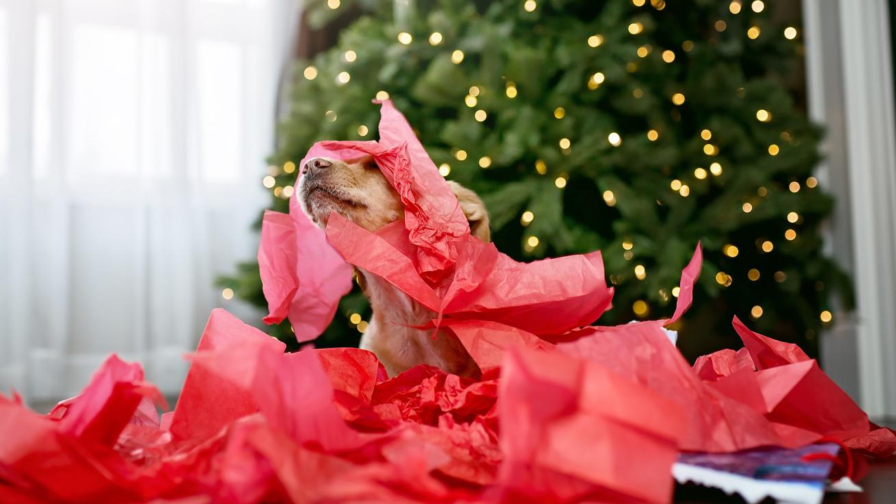 Ilyen a való élet karácsonykor, ha kutyád van: akik tönkretették az idilli ünnepet