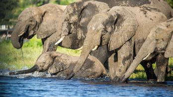 Hollywoodi PR céget bérelt fel Botswana, hogy meggyőzzön, nem is olyan rossz az elefántvadászat