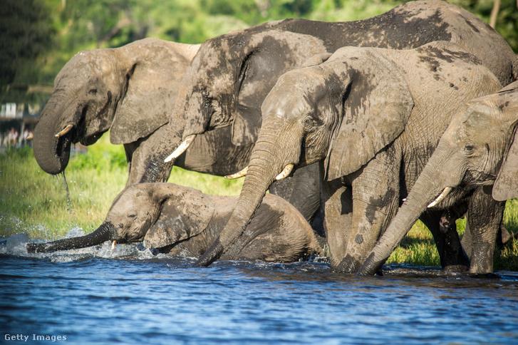 Elefántok a botswanai Chobe Nemzeti Parkban