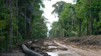 A brazil kormány nem hisz a klímaváltozásban, gyorsul is az amazonasi esőerdők irtása