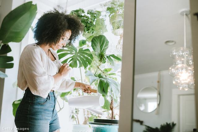 A növények boldogabbá tesznek