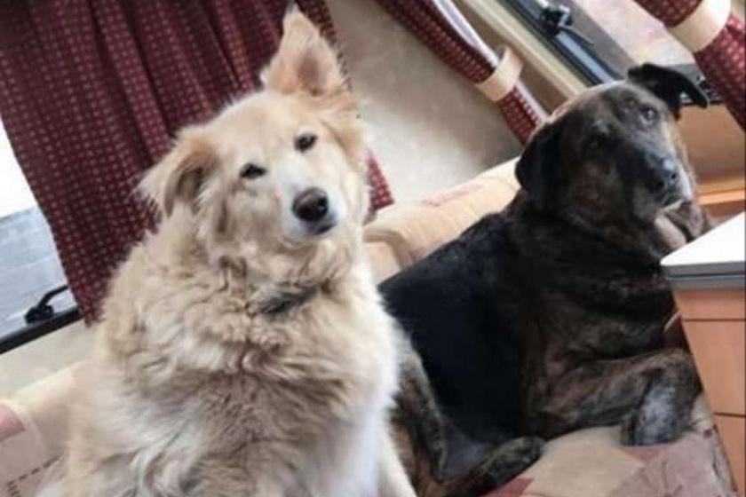 Rocky és Spencer a legcukibb kutyatesók voltak, míg az élet közbe nem szólt.