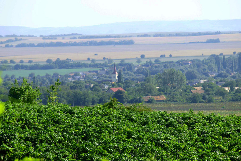 Csodás kis borfalu bújik meg Esztergom fölött: Kürt borait a világ legjobb éttermében kínálják