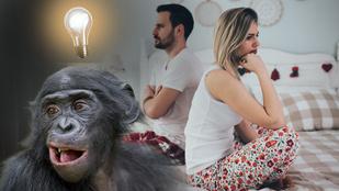 7 dolog, amit a majmoktól tanulhatsz a jobb szexről