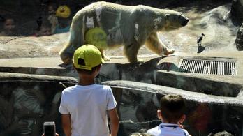 Akkora a hőség Moszkvában, hogy jéggel töltik meg a jegesmedvék ételét