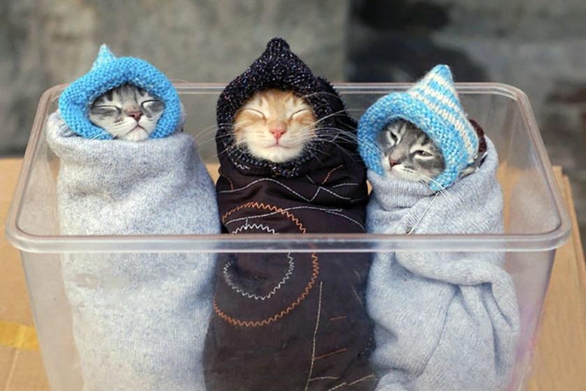 Így készül a macskaburrito: 10 kép, ami után te is ki akarod majd próbálni