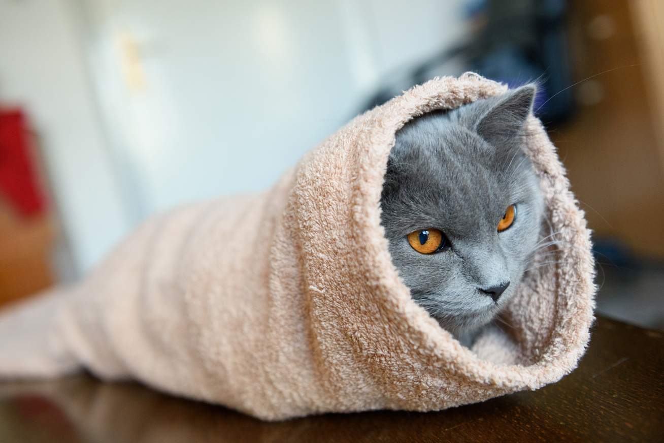 macska-burrito