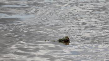 Cáfolta a rendőrség, hogy több holttestet találtak a Dunában Ercsinél