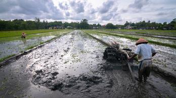 1200 szénerőműnek megfelelő hatása lehet a klímára a rizstermelésnek