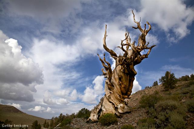 fogyás magányos fa együtt