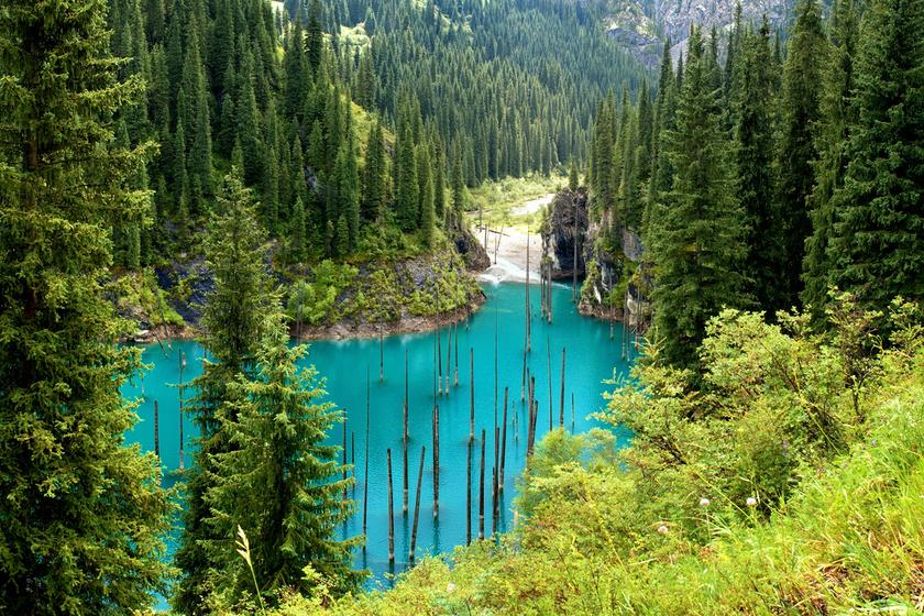 Lándzsaként emelkednek ki a vízből az elsüllyedt erdő impozáns fái