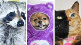 7 háziállat, akikből Instagram-sztárok lettek