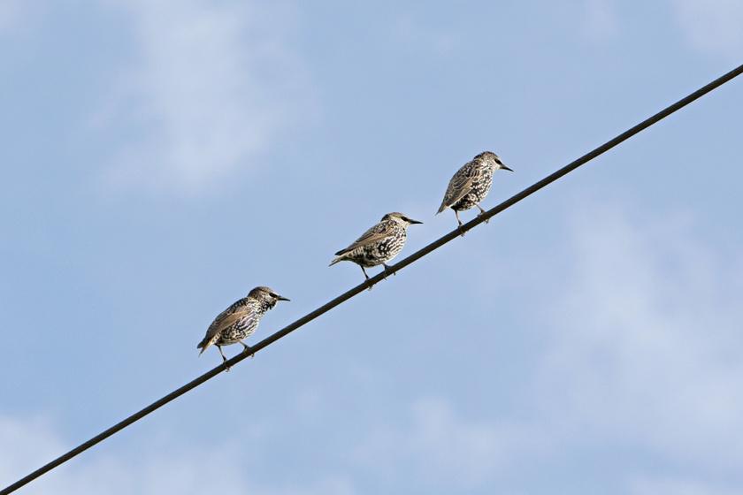 madarak-vezeteken