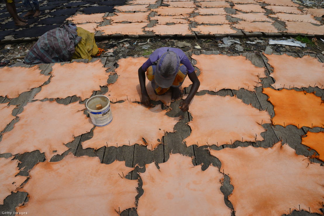 Bangladeshi gyerekmunkás egy bőrműves műhelyben szárít egy kikészített bőrt 2017. április 8-án.