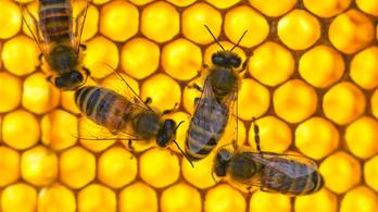 A méhek nemcsak számolni tudnak, de a szimbólumokat is értik