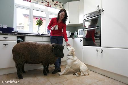 tk3s bm sheep 01042993