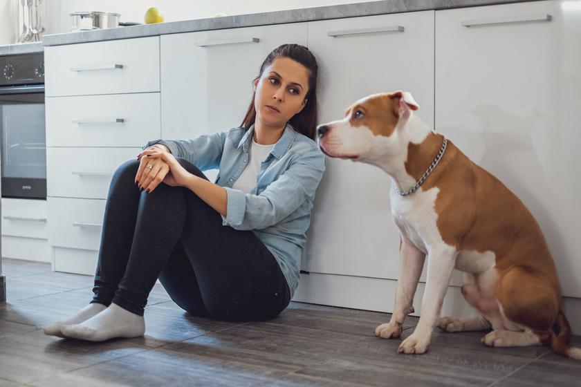 Hogy reagál a kutya, ha stresszes a gazdája? Meglepő a kutatás eredménye