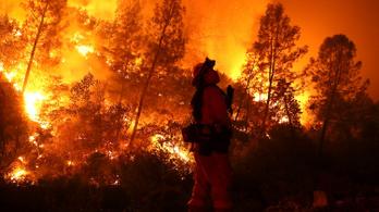 Kalifornia legnagyobb erdőtüzét darazsak okozták, na meg egy rájuk allergiás ember