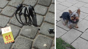 Három kerékpárt és egy kiskutyát lopott el P. Dezső