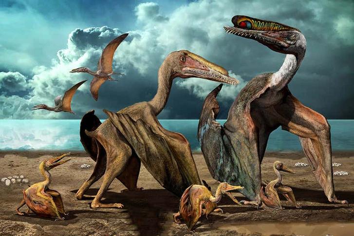 Fantáziarajz egy Hemipterus családról