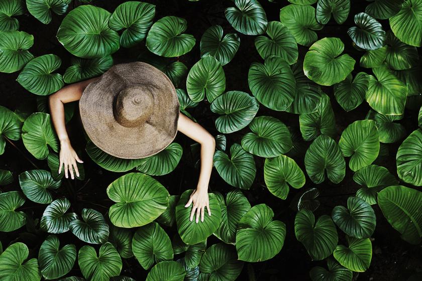 Nyugtalanító jelenséget figyeltek meg a növényeknél a tudósok: rosszat jelez