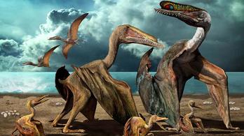 A frissen kikelt pteroszauruszok fészekhagyók lehettek