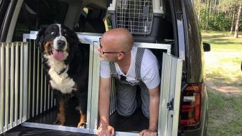 Így utaznak a kutyák az autóban