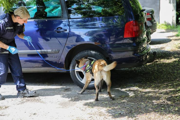 Rutinfeladat a kisrókának (a rendőrök egymás közt csak így becézik Körtét, láthatóan nem ok nélkül): az autó kerékjáratába rejtett szagmintát pillanatok alatt megtalálta