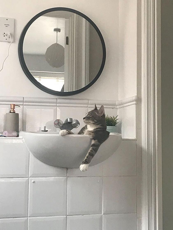 - A macskánk a mosdóban alszik, amikor azt hiszi, senki sincs otthon. Most lebukott.