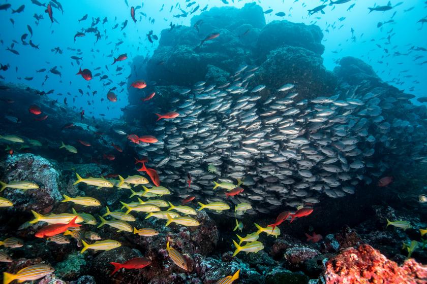 Alaposan átalakulhat a Föld élővilága 2100-ra a tudósok szerint: nem sok jót jósolnak