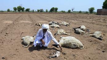 Több száz indiai falu halt ki teljesen a szárazság miatt