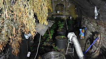 Vidéki présházban és budapesti lakásán termesztett drogot egy piliscsabai férfi