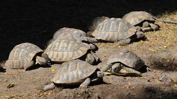 Egy ártatlan ózdi lányra uszította olvasóit egy szélsőséges portál a teknős megölése miatt