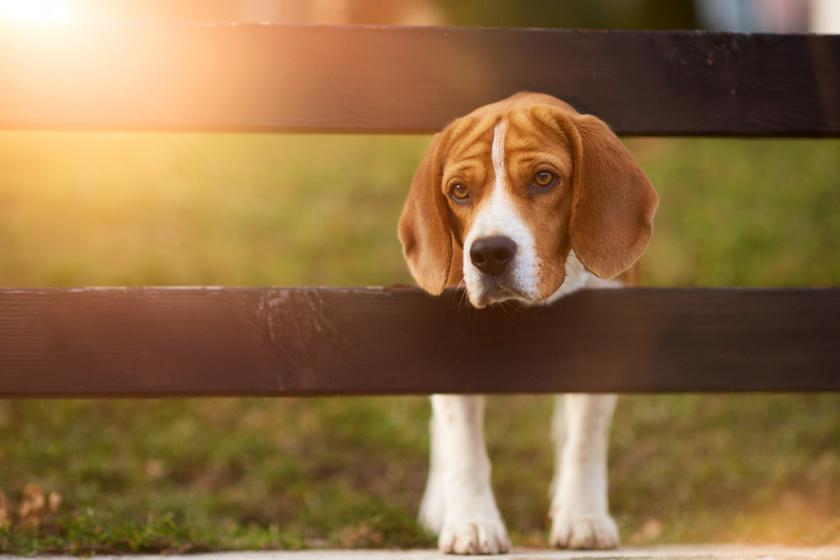 Életveszélyes szúnyogcsípés terjed: a kutyák mellett az ember sincs biztonságban