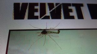 Olyan meleg van, hogy nem lehet szúnyogot irtani. Bocs, gyéríteni