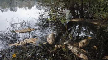 Száz mázsa hal pusztult el a Holt-Tiszában Szajolnál