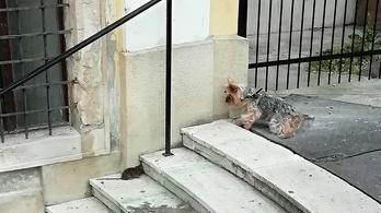 Több mint tízezer patkányészlelés volt Budapesten tíz hónap alatt