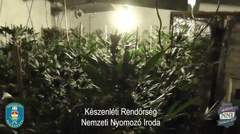 Körbejárt a rendőrség egy házi kannabisz-ültetvényt