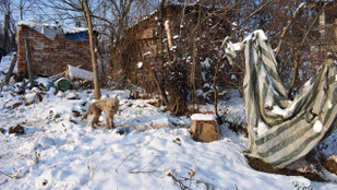 Vádemelésre várhat a kutyáját elhanyagoló komlói asszony