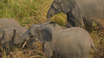 Afrika egyik legnagyobb rezervátumában nem garázdálkodtak vadorzók