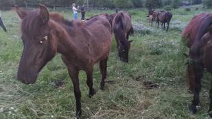 Bilincsben vitték el a pócsmegyeri lovasgazdát
