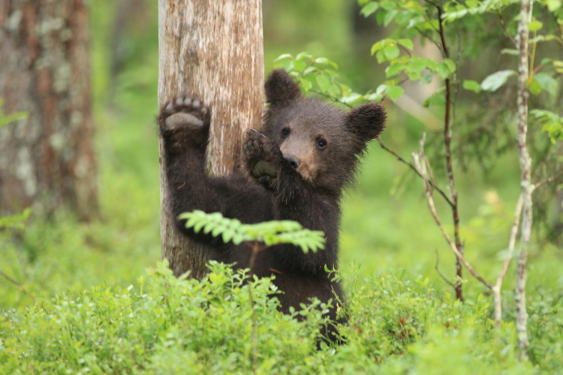 tk3s sn dabbing bear 3